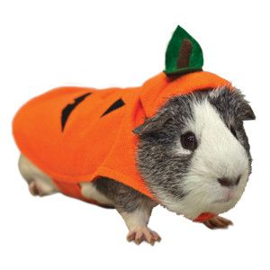 Even our smallest pets can be be part of the Halloween fun with this All Living Things® Pumpkin Small Pet Costume - PetSmart $4.79