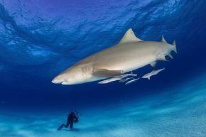März'18: Sharkschool™ Bahamas - Haiseminar + Tauchsafari #sharkschool #bahamas #haiseminar #tauchsafari #wirodive #tauchreisen #erlebnisreisen #scubakids #oceanlovers #born2dive #touchedbynature #tauchen #haie #sommer #sonne #urlaub