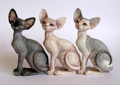 sphynx cat i want one so bad but aaron thinks their ugly :(