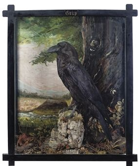 """Grip"" - Charles Dicken's Pet Raven (Corvus corax) in a late Victorian Taxidermy Case. ""Grip"" is Memorialized in his Novel BARNABY RUDGE."