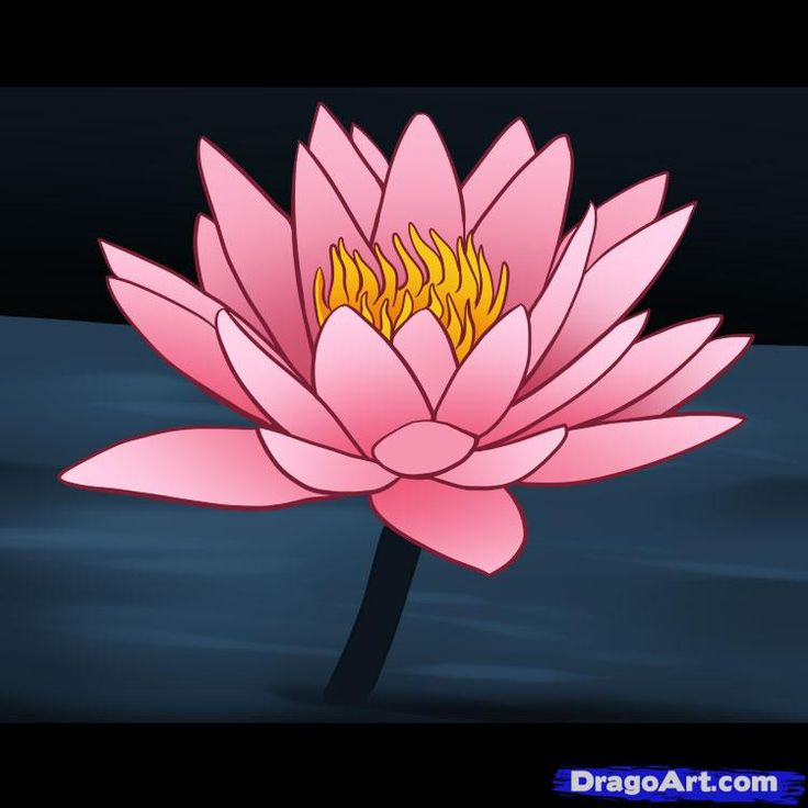 How to draw a water lily projects to try pinterest for Simple flower drawing tutorial