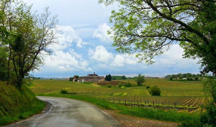 Vignoble de Montagne-St-Emilion, vers Parsac