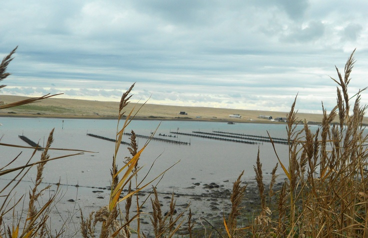 oyster beds at chesil beach, Winter morning