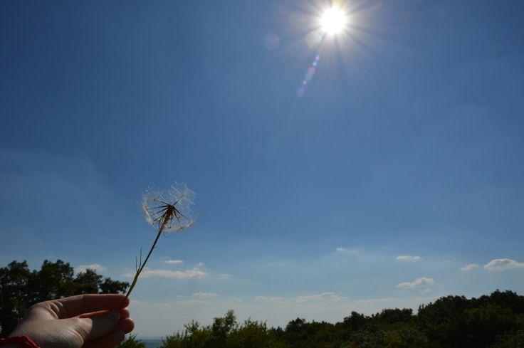 Moja pupava moja fotka maja ruka  My dandelion my photo my hand