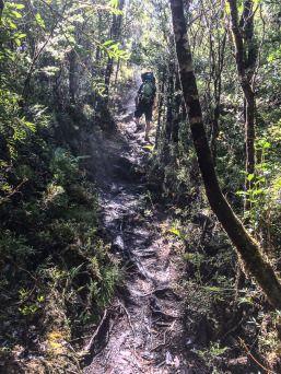 Mysthische Stimmung im Tantauco Nationalpark Aus dem Album Chiloé - Naturschönheiten