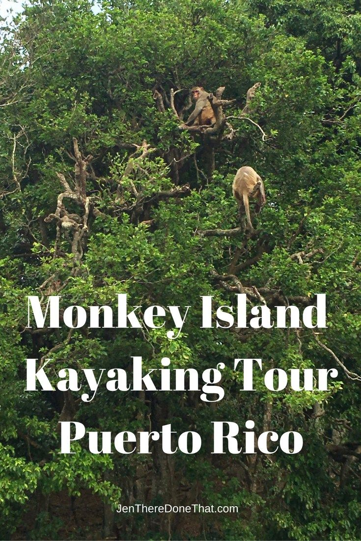 Monkey Island Kayaking TourPuerto Rico