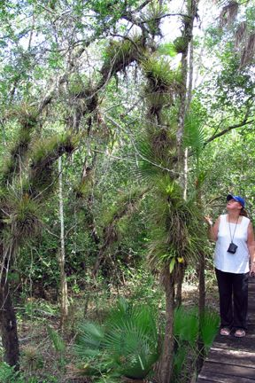 crooked tree belize | Crooked Tree Wildlife Sanctuary - Belize