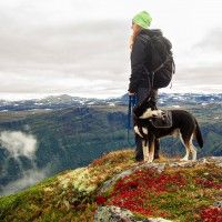 #dogalize Cura del cane in montagna e sulla neve #dogs #cats #pets