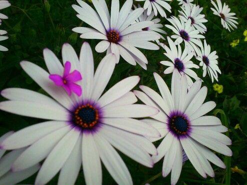 Flor retocada por @Joan Dennett , y mi pequeña florecilla Fucsia :)