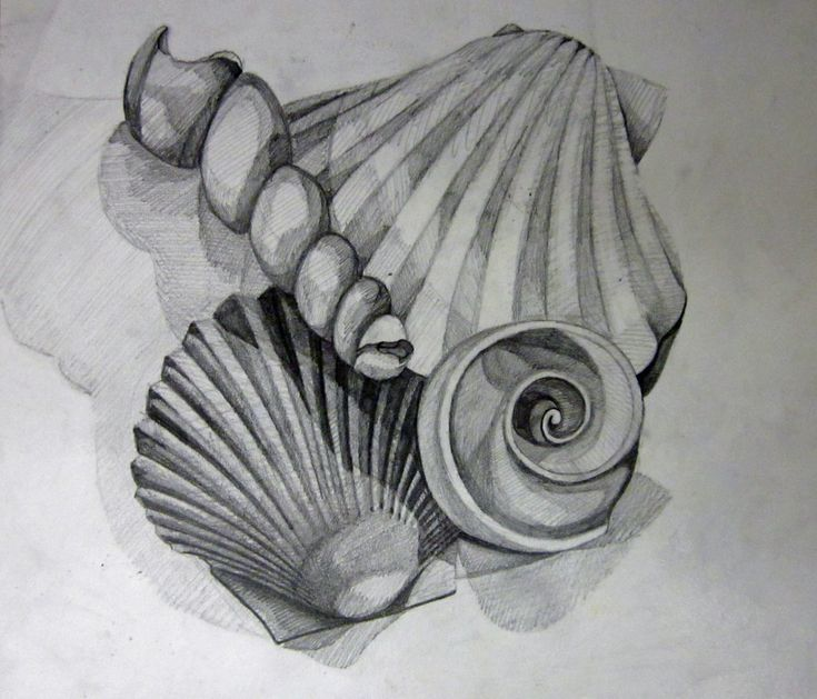 Value Study Shells Still Life 8th Grade Lesson Tones /Light/Shade..this lesson is the most creative way of drawing..