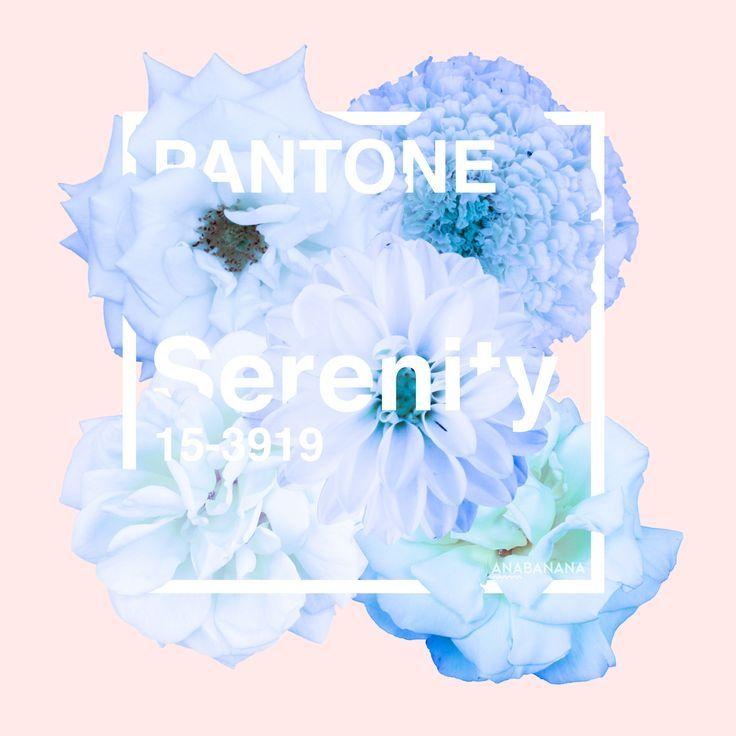 Rose Quartz et Bleu Serenity : Pantone 2016 on Pinterest  Pantone ...