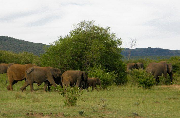 Business as usual in the Maasai Mara, Kenya!