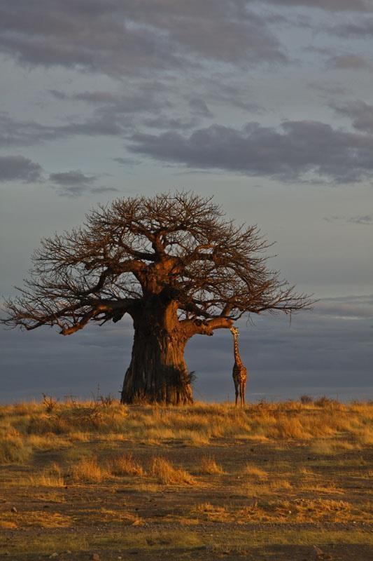 Africa | Morning at Ruaha National park. Tanzania |  Marjut Raunio