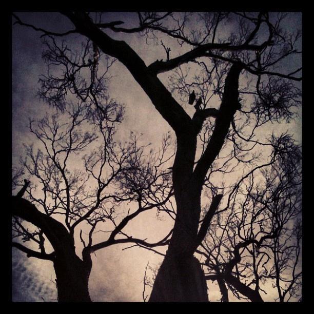 two little birds sitting in a tree