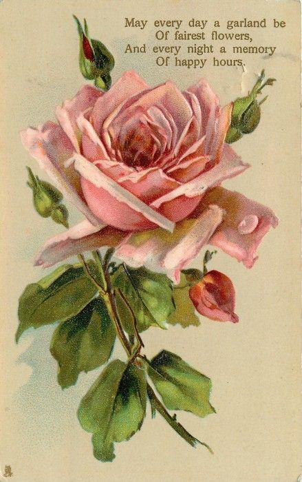Pink rose  buds.  Poem: May every day a garland be of fairest flowers, and every night a memory of happy hours.