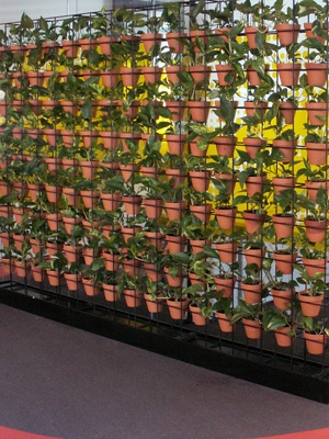 Terracotta pots look great in a green wall or vertical garden. See more at www.greendesign.com.au