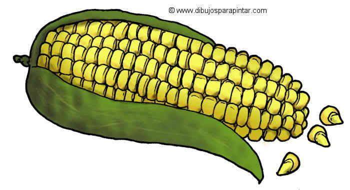 Dibujo Grande De Maiz Maiz Dibujo Maiz Alimentos Dibujos