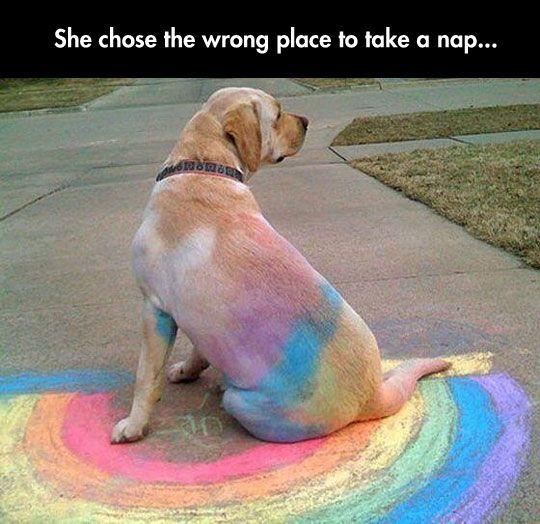 Rainbow Labrador