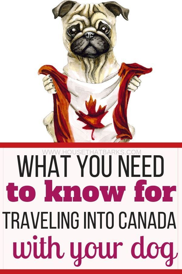 9 Best Tips For Traveling To Canada With A Dog Canada Travel Dog Travel Pet Travel