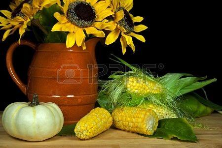 girasol ramo con el maíz en la mazorca Foto de archivo - 14848870