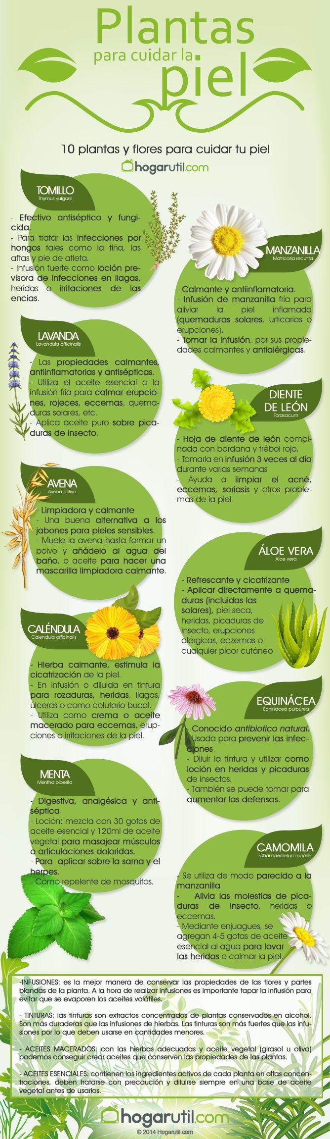 Infografía: plantas para cuidar la piel de hogarutil.com: