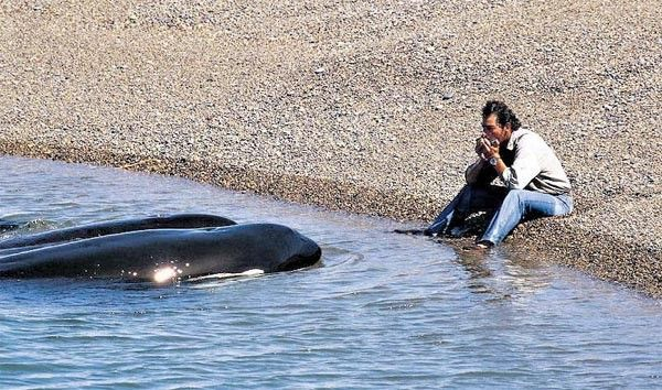 .Roberto Bubas - Friend of the orcas...   Omg I would die!!