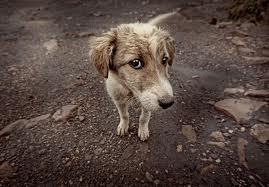 Θετική Ανταπόκριση στη πρωτοβουλία κατοίκων για τη διάσωση των αδέσποτων της Καλαμάτας ~ Lil animals