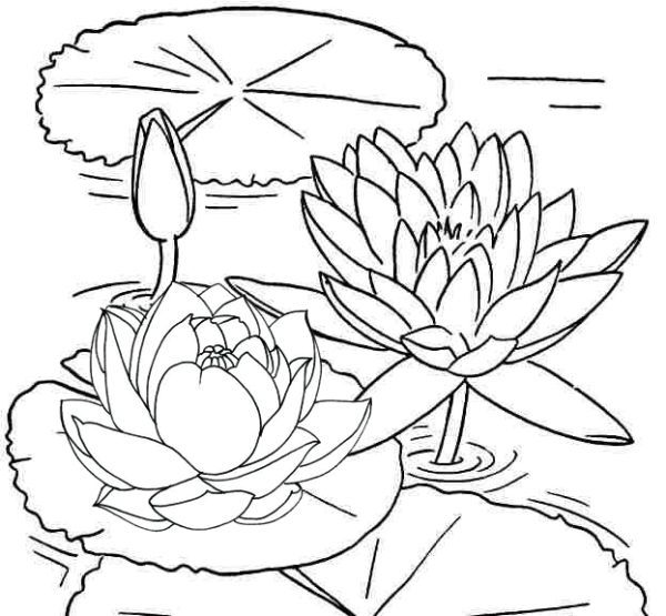 Lotus Coloring Pages Printable Free Coloring Sheets Coloring Pages For Girls Mandala Coloring Pages Cartoon Coloring Pages