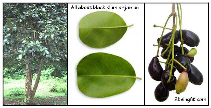 Jamun | Black plum – nutrition, proven benefits, uses