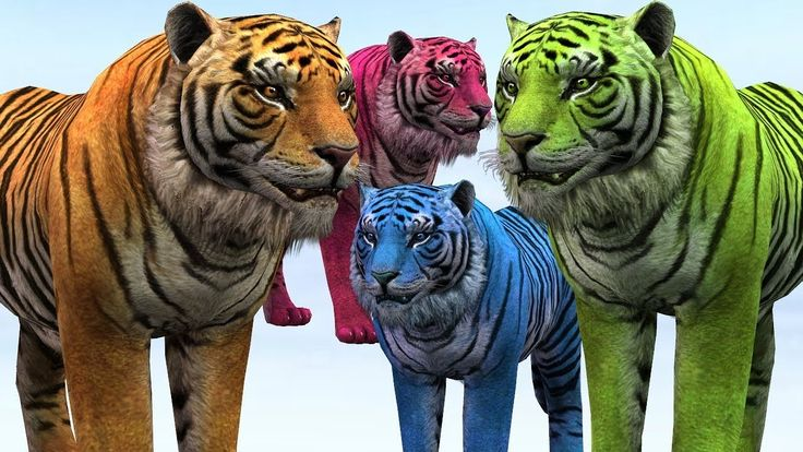Learn Colors With Tiger Finger Family Collection || Animals Colorful Colors || Top 20 Nursery Rhymes