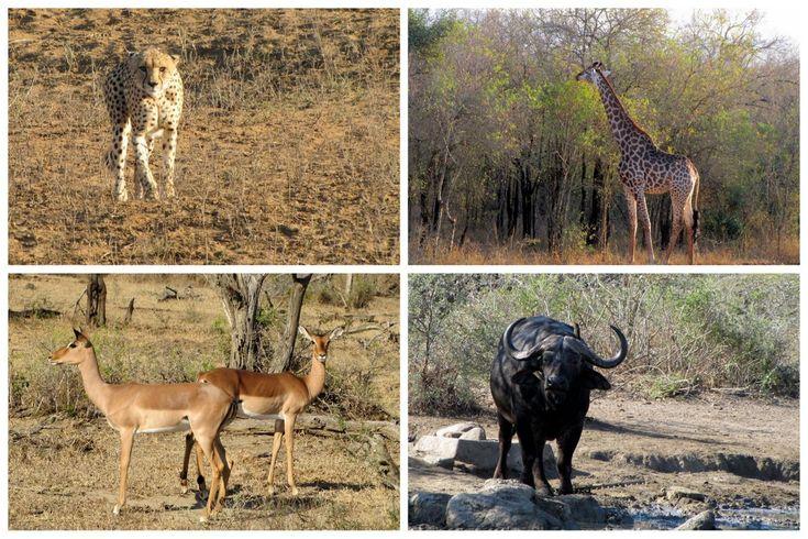 L'Afrique du Sud est un pays fascinant: paysages grandioses, faune sauvage et histoire de l'Apartheid. Tous les points forts d'un voyage en Afrique du Sud.