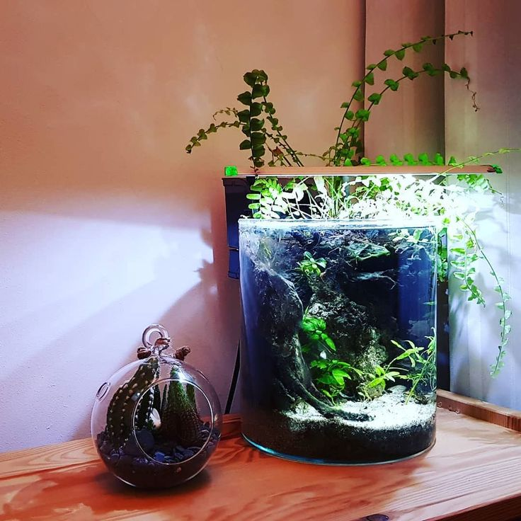 Seeking solitude in the terrarium #terrarium