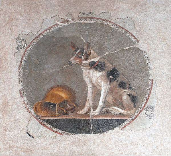 Mosaic depicting a sitting dog - Collections - Antiquities Museum