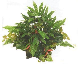 SILK PLANT 2