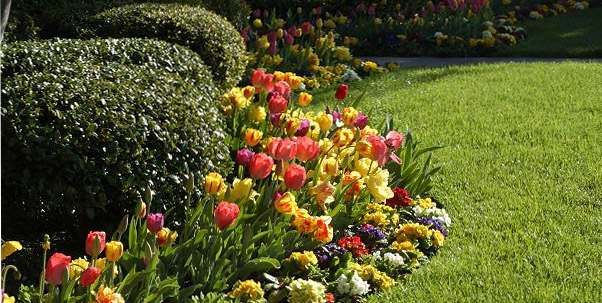 11 best images about Spring Bulb Gardens on Pinterest ...