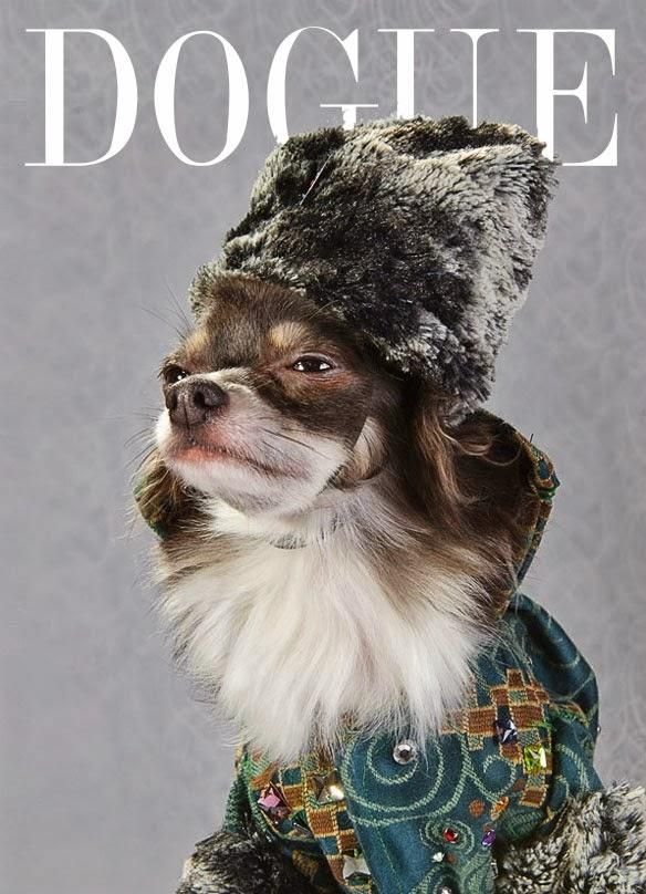Pet Designer Anthony Rubio in collaboration with photographer Sophie Gamand have dspicted Chihuahuas as super models