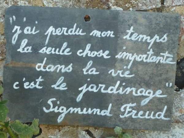 CITATION DE FREUD