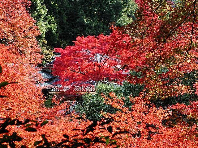 https://flic.kr/p/DLNh5   箕面紅葉(autumn colors)   箕面(大阪府)紅葉