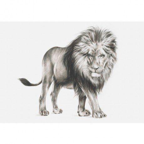 Masculum Panthera Leo Print