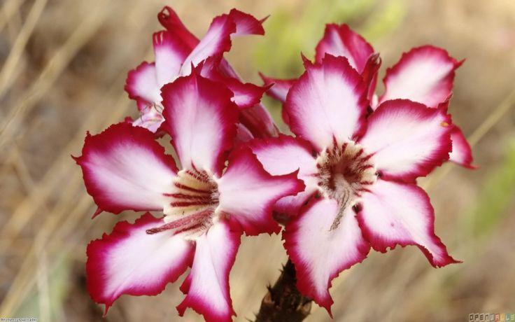 Pix For > Rare Flower Names