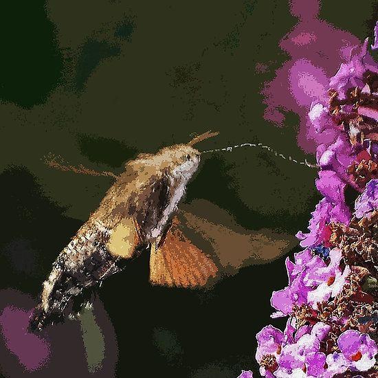 Papillons Sphinx  - Butterflies  PAINT  03 (c)(h)  Kodak z1285  by Olao-Olavia / Okaio Créations 2013