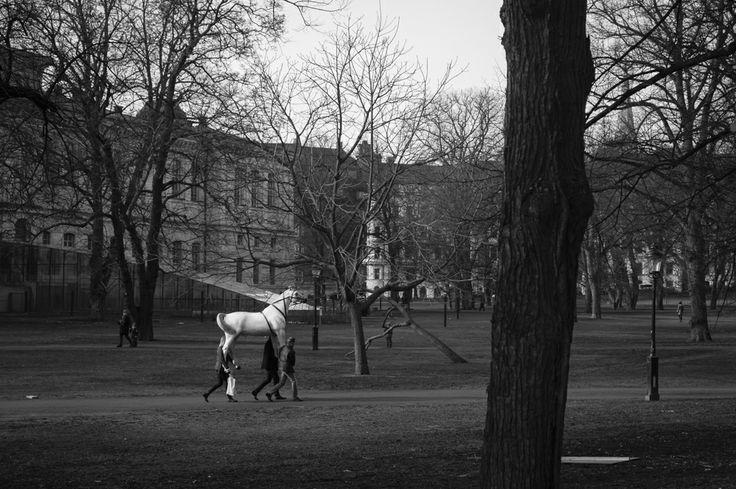 Humanback riding #horse #humans #stockholm #humlegården #sweden #bw
