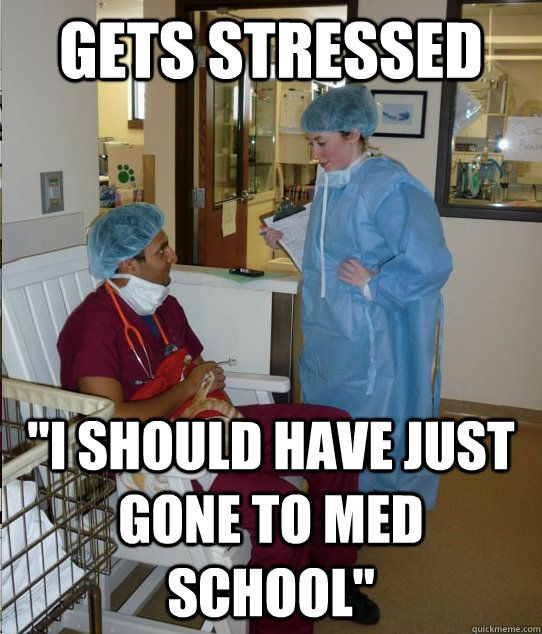 yep. That's about it. Student memes, Vet assistant, Tech