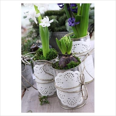 Hyacinths in tins and pots