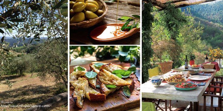 Tuscany Olive Harvest Holiday