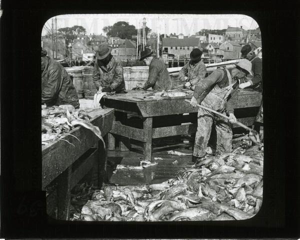 Cleaning codfish, Gloucester, Mass. | saskhistoryonline.ca