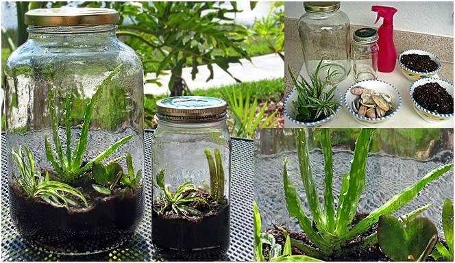 O terrário surgiu por volta de 1829, quando o inglês Nathaniel Ward, médico e colecionador de plantas raras, observava uma crisálida de borboleta dentro de uma garrafa. A terra da garrafa tinha uma raiz de samambaia misturada e ela brotou e cresceu. Ele testou outras plantas e concluiu que, com um pouco de luz e umidade, os vegetais poderiam viver por anos num ambiente lacrado.