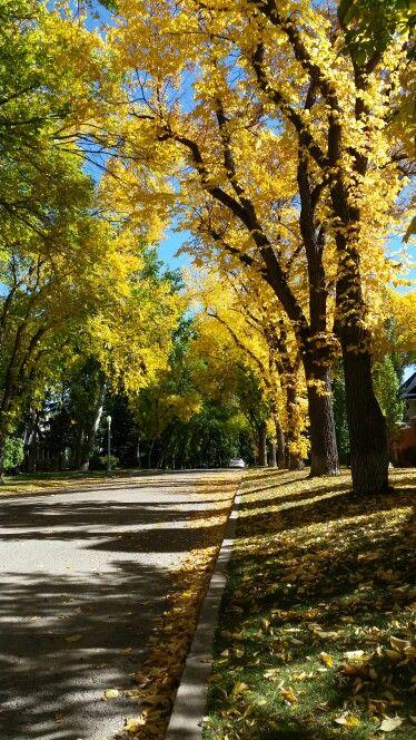 Autumn in Edmonton Alberta
