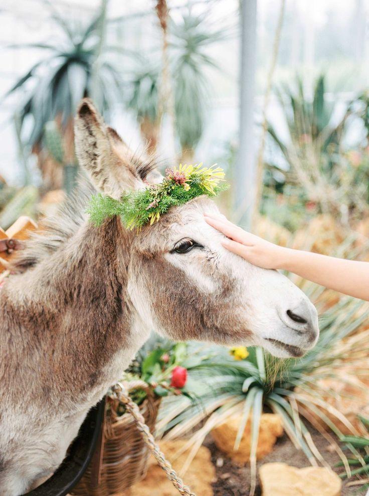 The Cutest Wedding Donkey <3 www.zwartfotografie.nl - Styled Shoot Cinco de Mayo / Mexican theme