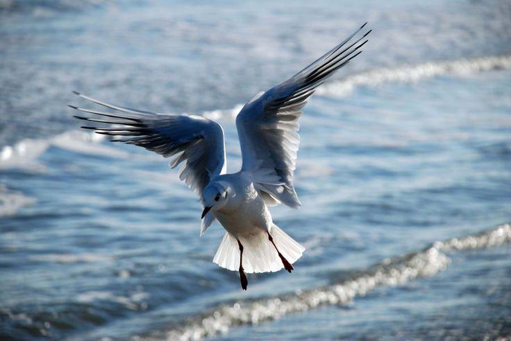 """Vogel am Strand in der Nähe der Ferienwohnung """"Zum alten Pfau"""" im Ostseebad Göhren auf der Insel Rügen, Urlaub auf Mönchgut an der Ostsee - Ihre private Unterkunft an der Ostseeküste"""